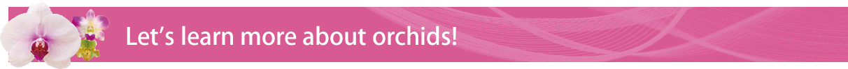 Let' s learn more about orchids!