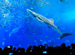aquarium_01