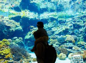 aquarium_06