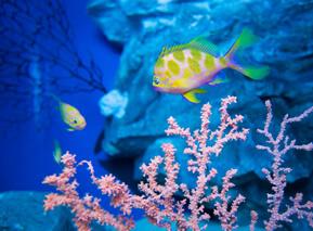aquarium_09