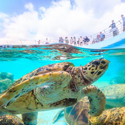 8月的海洋博公園