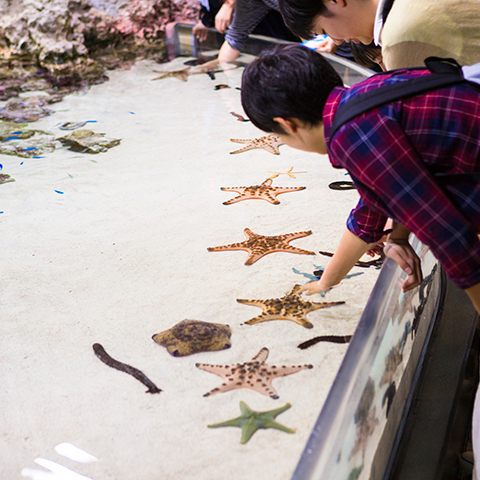 9月的海洋博公园
