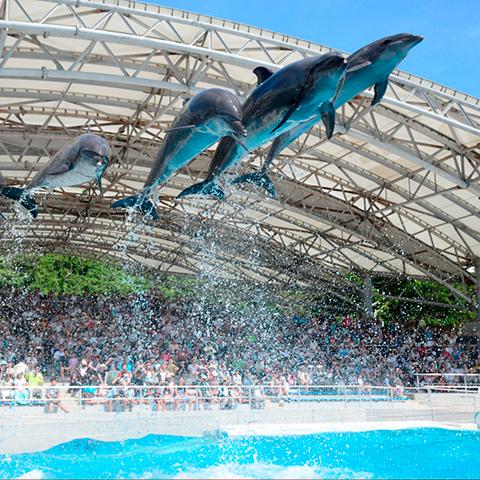 Ocean Expo Park of November