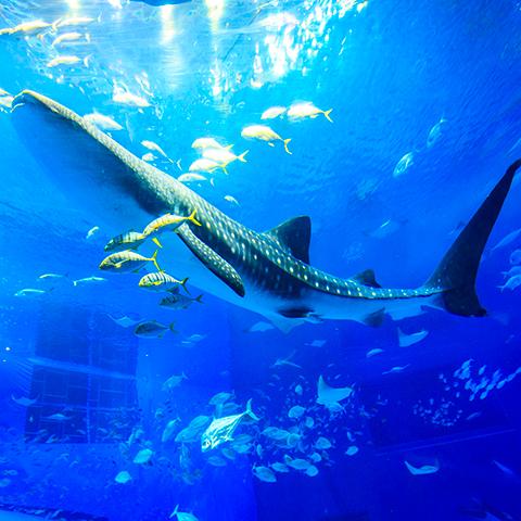1月的海洋博公園