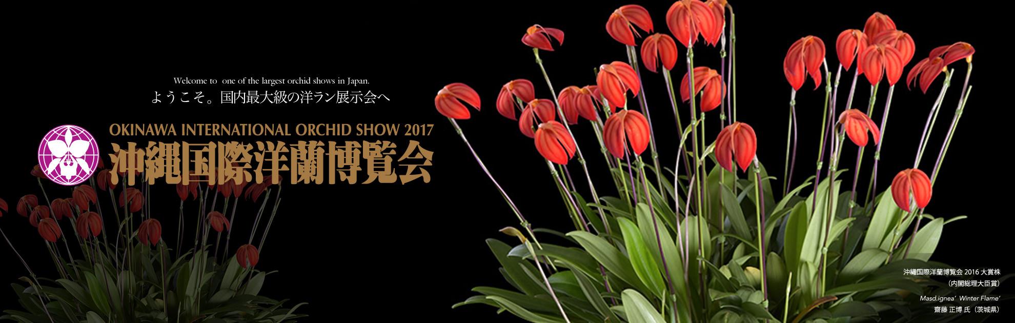 Big event of international scale that approximately 20,000 points of orchids are displayed! okinawakokusaiyoranhaku*kai 2017