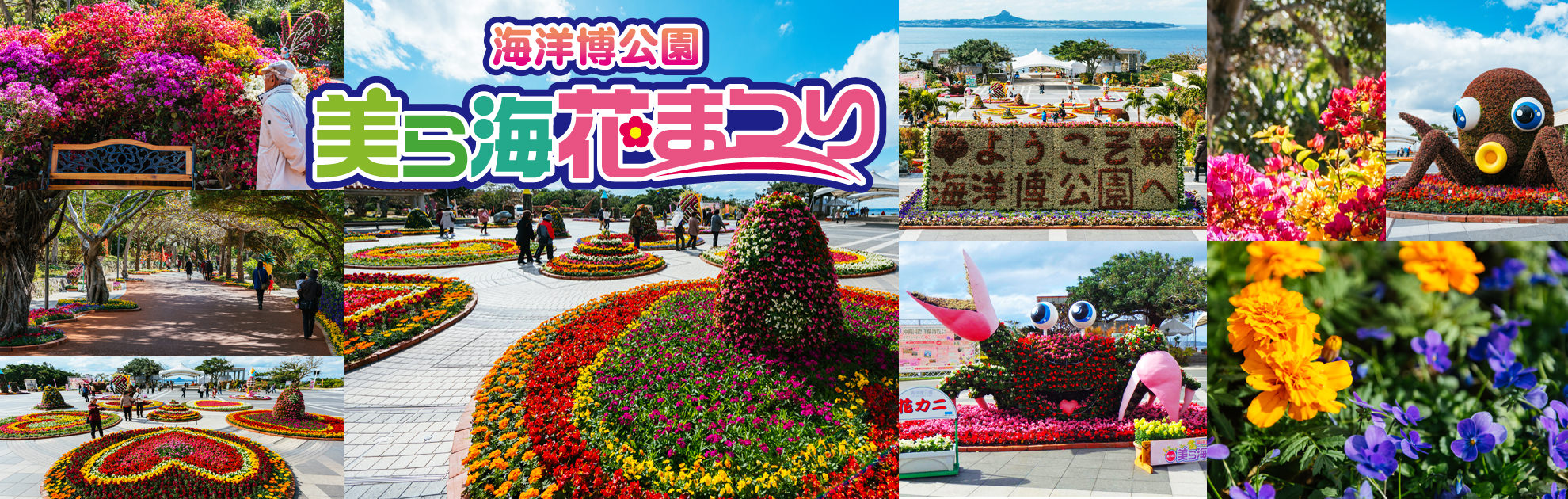 Ocean Expo Park twelfth beauty and others Sea flower Festival! Flowers spreading through one side meet all of you!