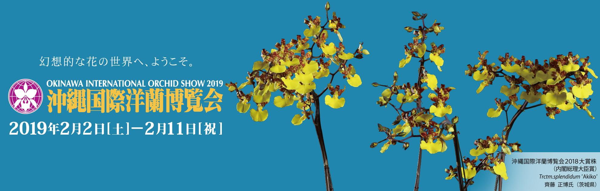 okinawakokusaiyoranhaku*kai 2019