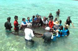 サレービチ(追い込み漁)体験