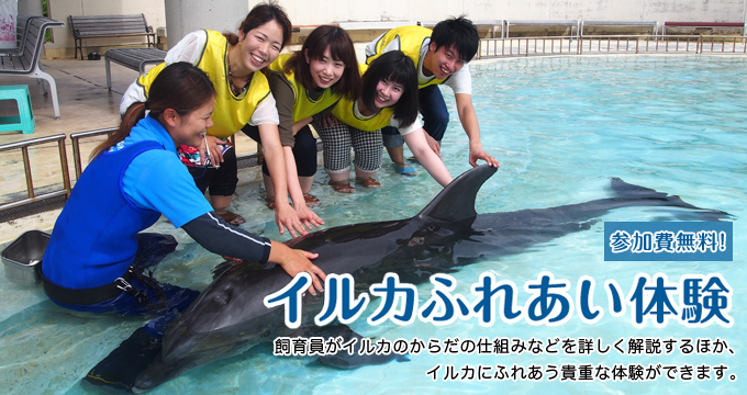 Dolphin contact experience
