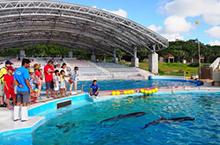 "Backside onozoitemiyo ""yuntaku dolphin backyard tour"" of the breeding spot"