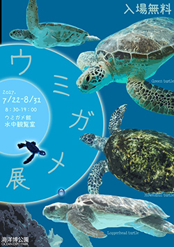 """在暑假特别展示""""海龟展""""今年举行!"""