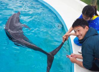 돌고래・마나티・바다거북 사육원이 말하는 비화!