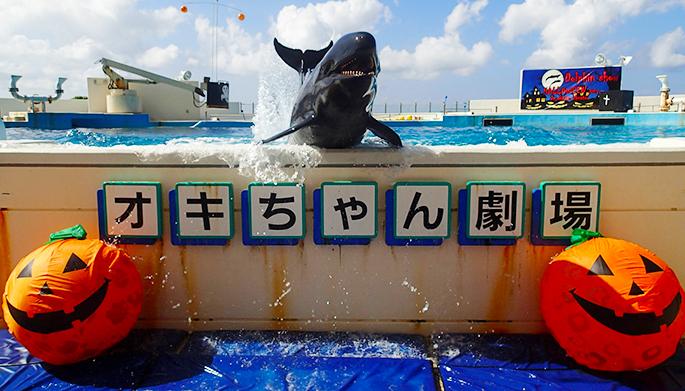 oki-chan海豚剧场海豚表演万圣节版本