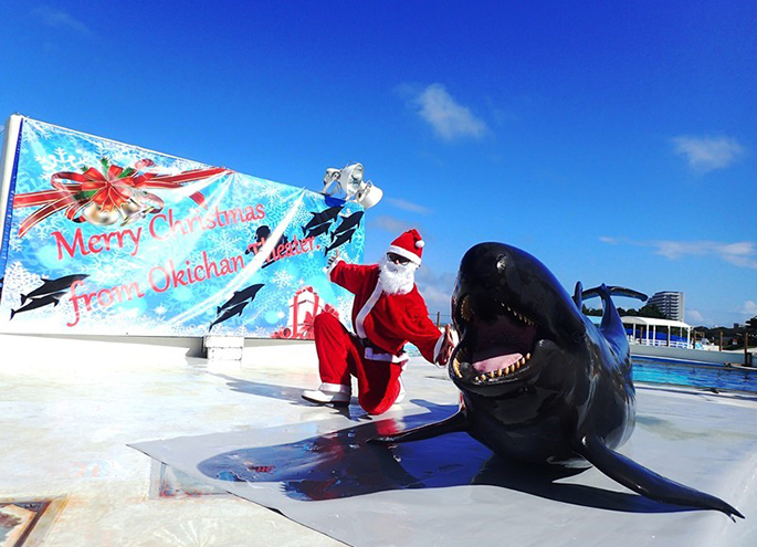 Merry Christmas!! In Okichan Theater dolphin show Christmas version - Okichan Theater dolphins and wonderful Christmas! ...