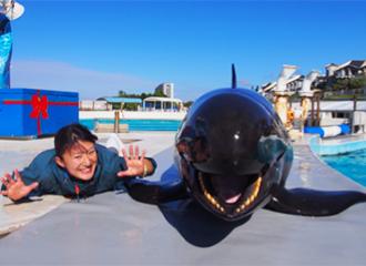 돌고래·마나 티·바다거북 사육원이 말하는 비화!!