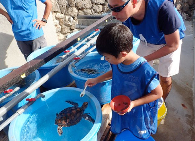 State of experience to have sea turtle of last year, and to go for
