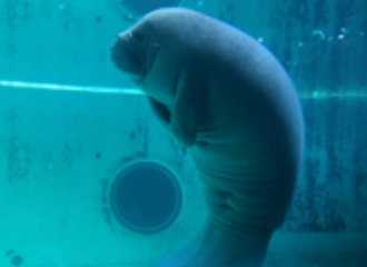 Inside story that member of dolphin manatee sea turtle breeding talks about!
