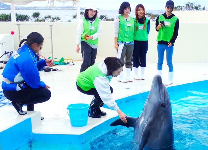 海豚的飼養體驗