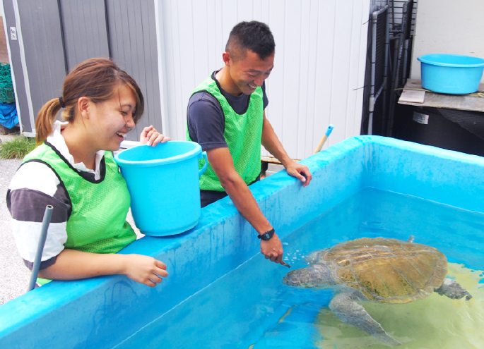 海龜的飼養體驗