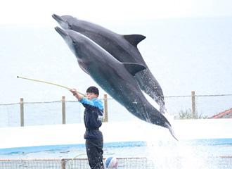 海豚·海牛·海龟饲养员说的内情!!
