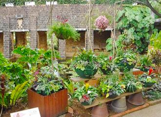 彩色葉花園展銷會