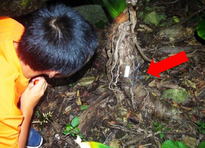 クロイワトカゲモドキの観察
