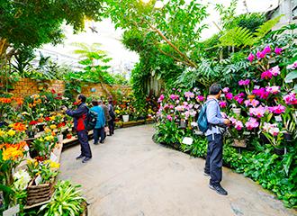 得獎的蘭花的盆景的展覽