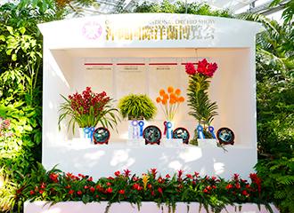 開始全體的最高獎項的內閣總理大臣獎,展覽各部門的最高位的蘭花。是最大值得看的地方。