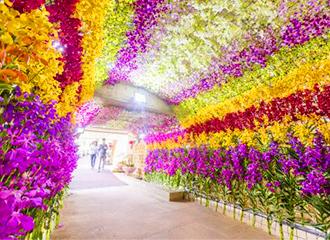 在由插花的蘭構成的隧道哪裡看來在花是許多!照片映照,成功。