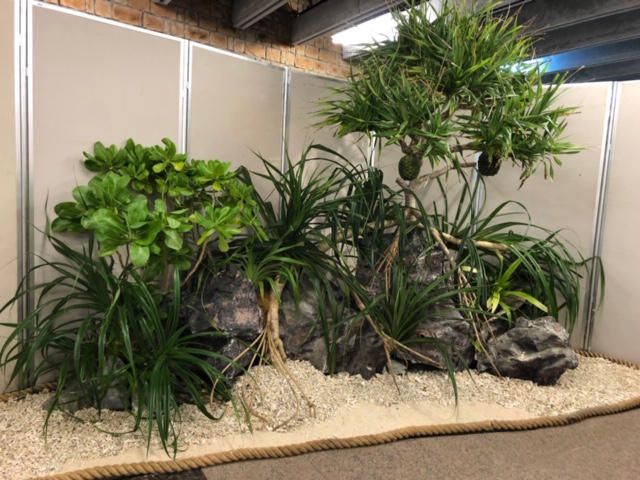 再現沖繩的海岸植被的顯示器登場!