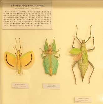 Okinawa and world insect flock!