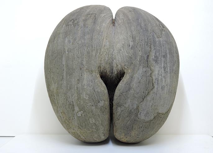 The world's biggest seed! futagoyashi