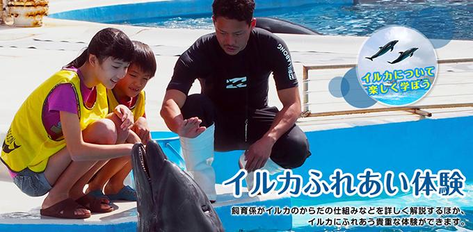 海豚接觸體驗