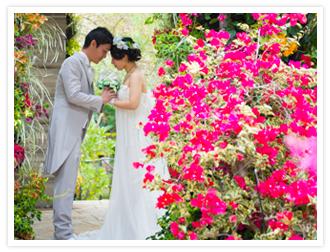 Cattleya photo