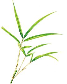 たけ(竹) | 植物園探検マップ ...