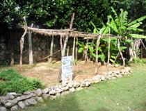 Vegetable garden (a Thai)