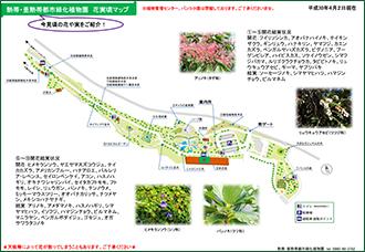 热带、亚热带都市绿化植物园