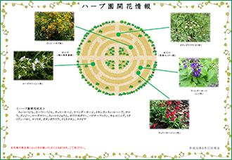 Tropical & Subtropical Arboretum