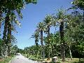 耐潮風植物椰子類樣品區