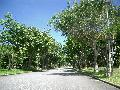 耐潮風植物高木見本區