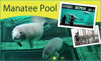 Manatee Pool