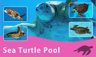 Umigame-kan (Sea Turtle Pool)