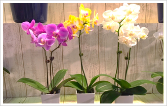 A lot of orchids