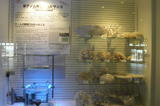 Whole genomic analysis coral on exhibit