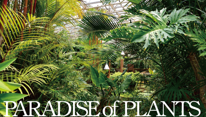PARADISE of PLANTS