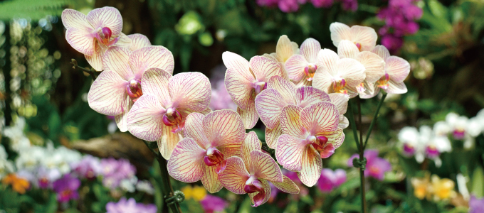 We hold various plans exhibition to color season including tropical fruit exhibition having the domestic highest possible orchid exhibition and sweet flavor.