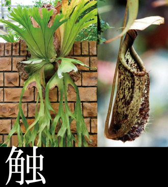 We mention variety of plant. Encounter with various plants including fern and insectivore breathing quietly in tree of heavy nestling baobab and the depths of forest is waiting.