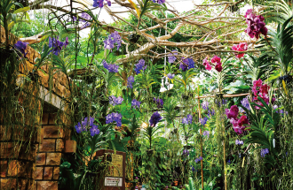 Orchid and flowers of bright southern country which are in full glory nobly while giving off sweet flavor and tropical fruit which grows heavily…Space such as the one scene of story filled with tropical signs that it is deep to open in front. Small trip to stimulate Gokan from here begins.