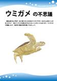 海龜的不可思議