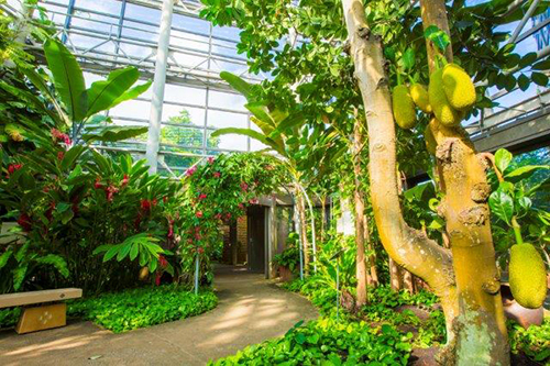 News of tropical dream center fruit tree greenhouse repair work
